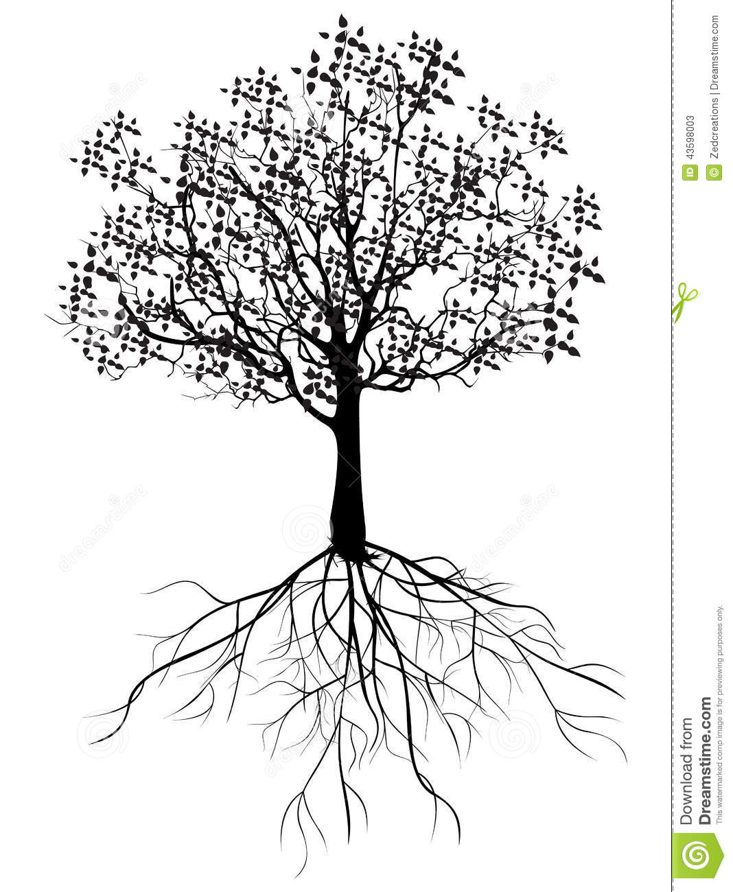 tree roots drawing clipart best filsonclub