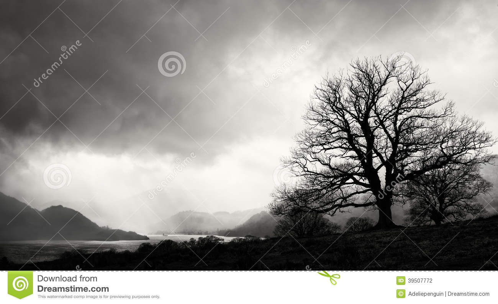 Tree Silhouette, Lake District, England