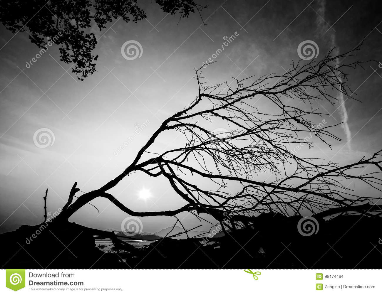 Tree silhouette with meaningful shape abstract black and white photo