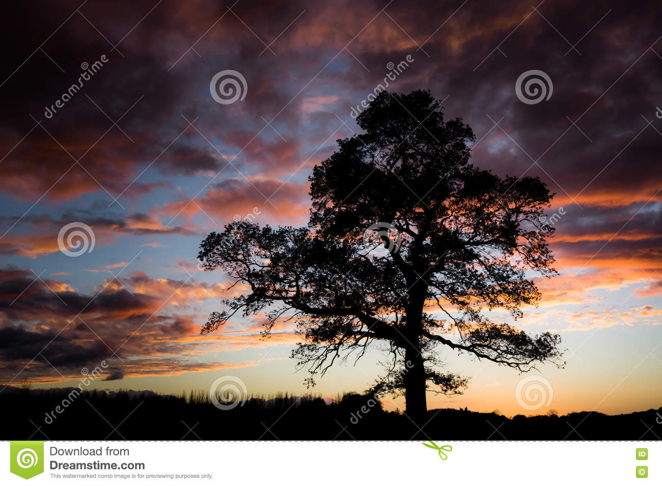 Tree silhouetted against a sunset