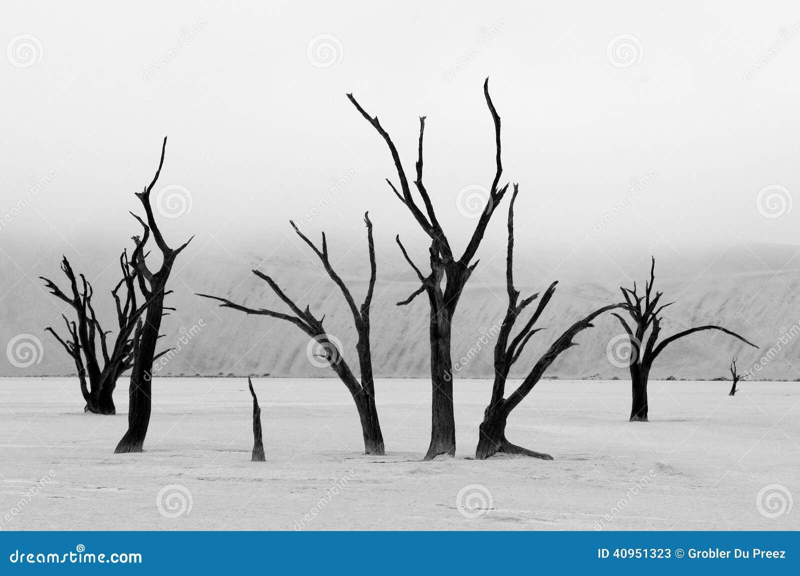 Tree skeletons in monochrome, Deadvlei, Namibia