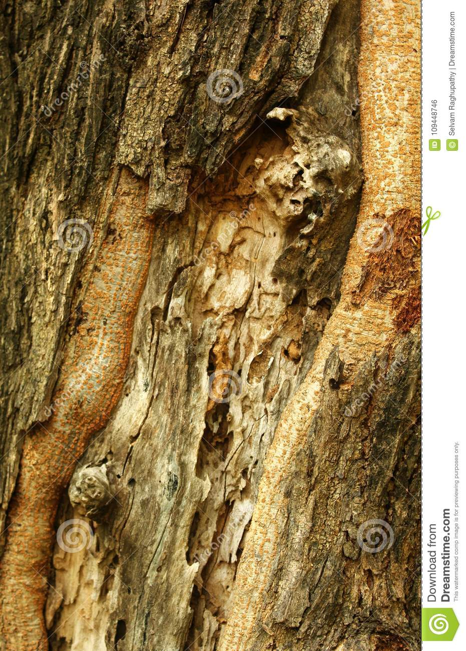 A Tree Skin Stem Texture Background Stock Photo Image Of Peaceful Damaged 109448746