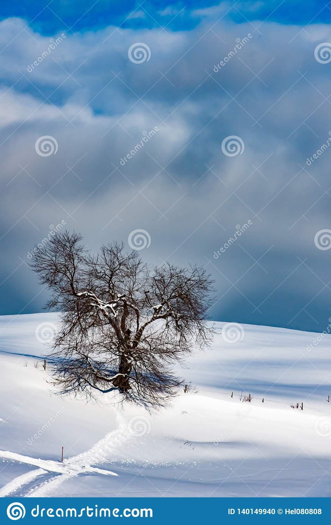 Tree in snowy landscape, lonely tree, solitary tree on hill in snow covered Allgau in winter