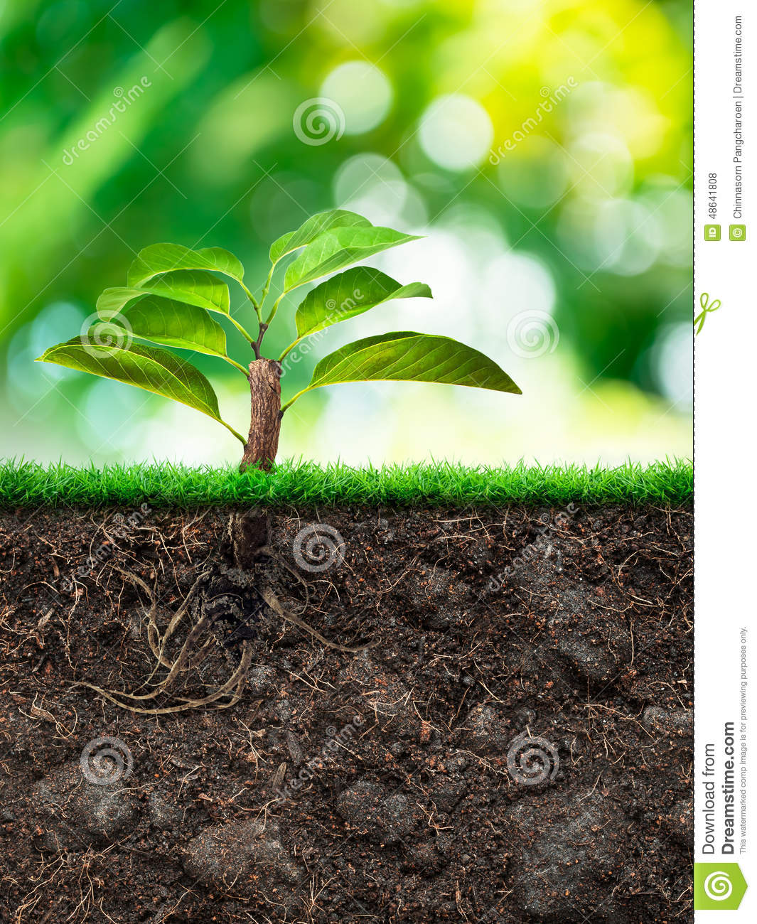 Tree and soil with grass stock photo image 48641808 for Soil and its origin