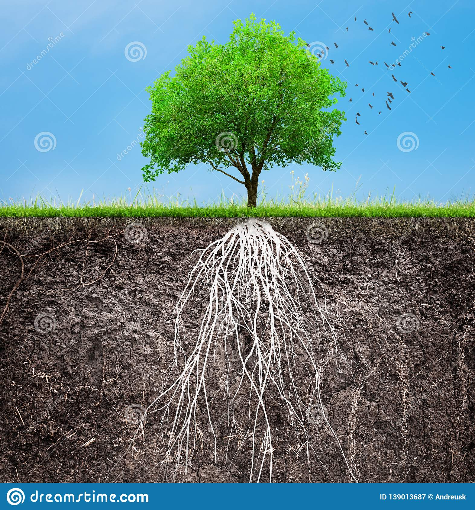 A tree and soil with roots and grass