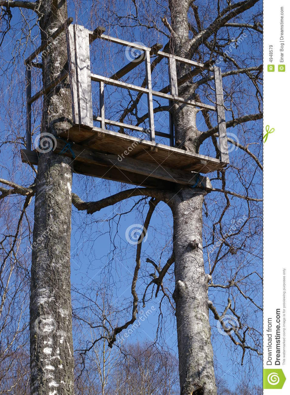 Tree Stand In Birch Trees Stock Image Image Of Tree