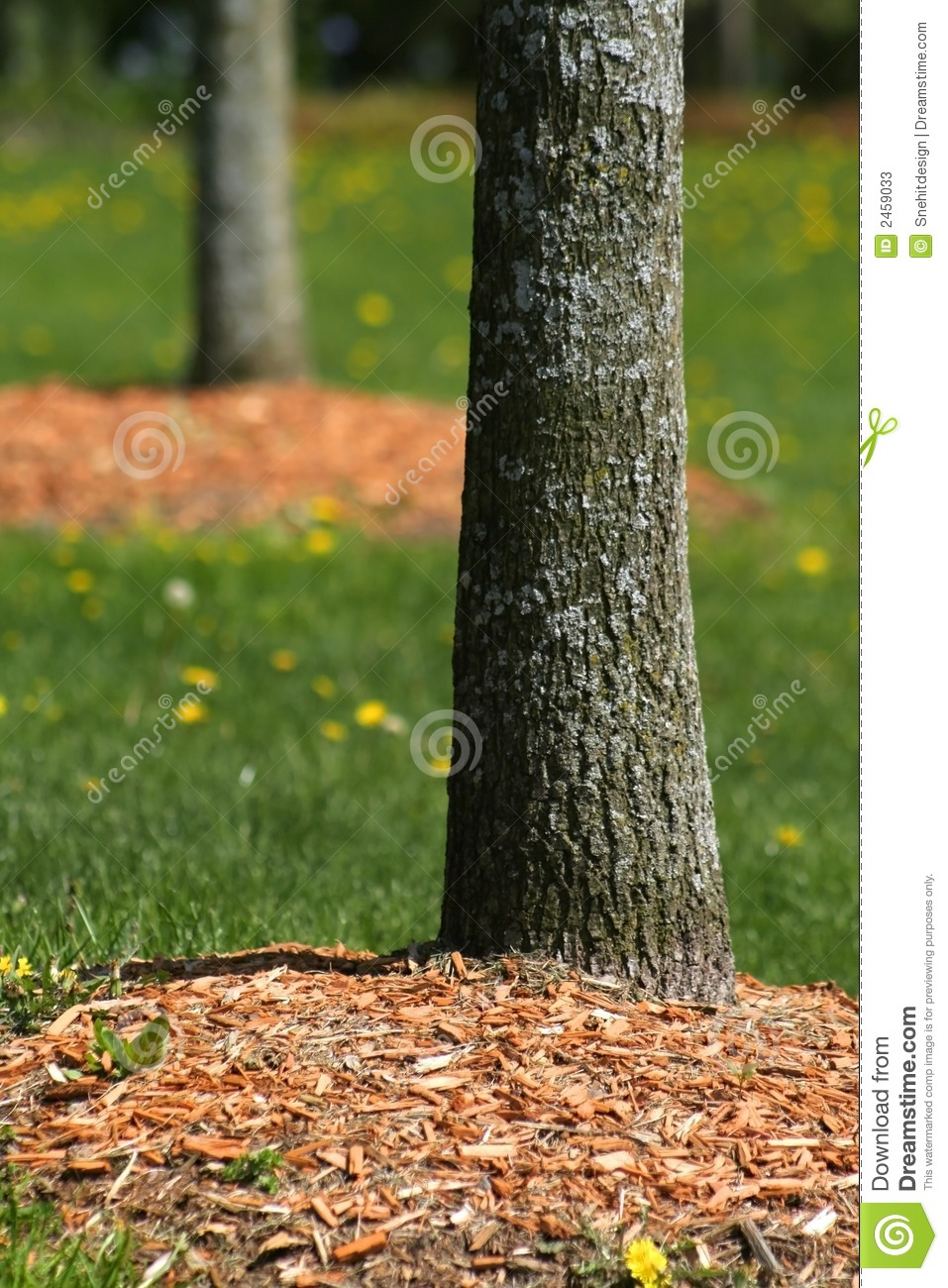 tree stems stock image image of bough green nature