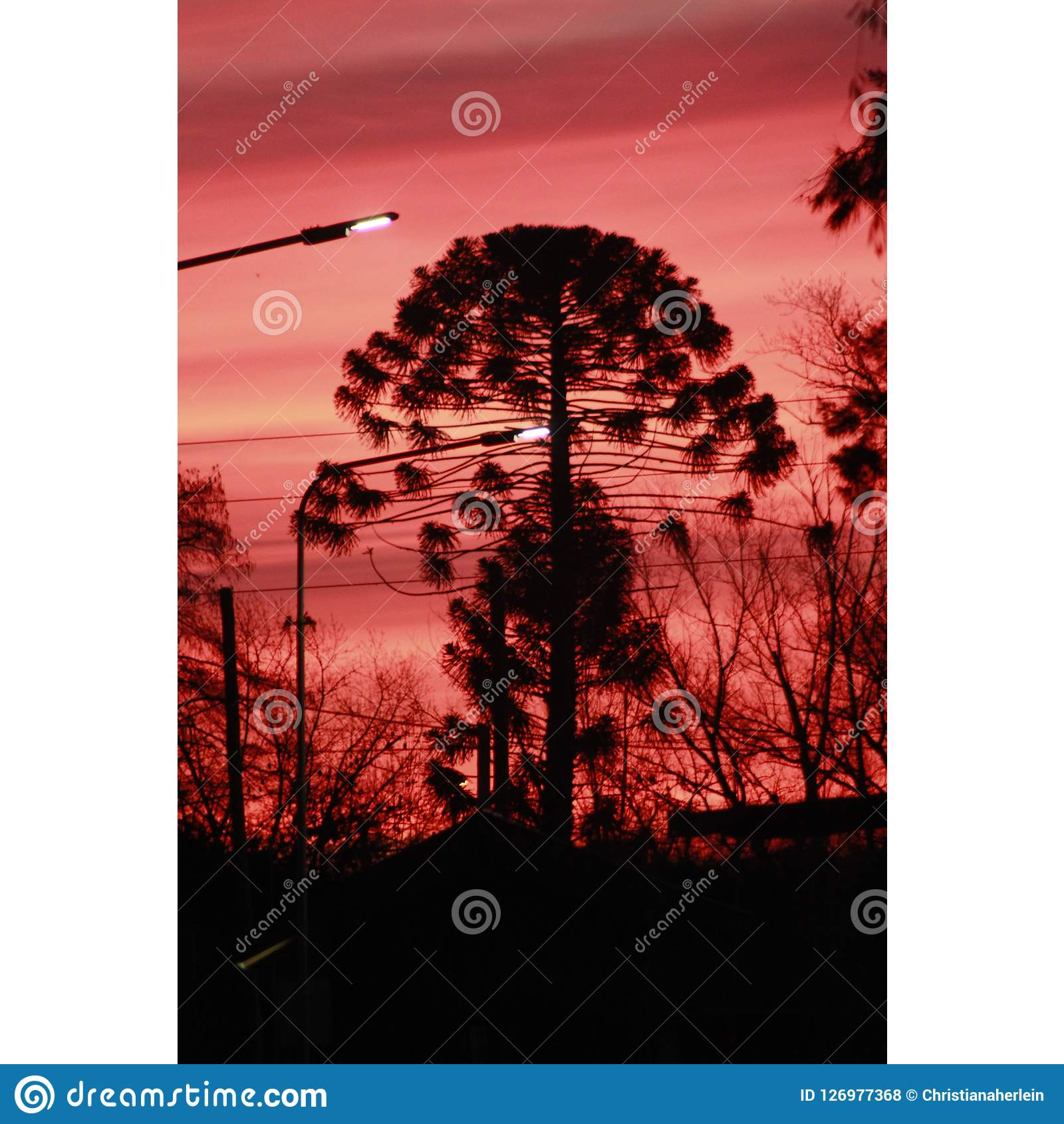 Tree On Stormy Sky Stock Photo. Image Of Over, Perfect