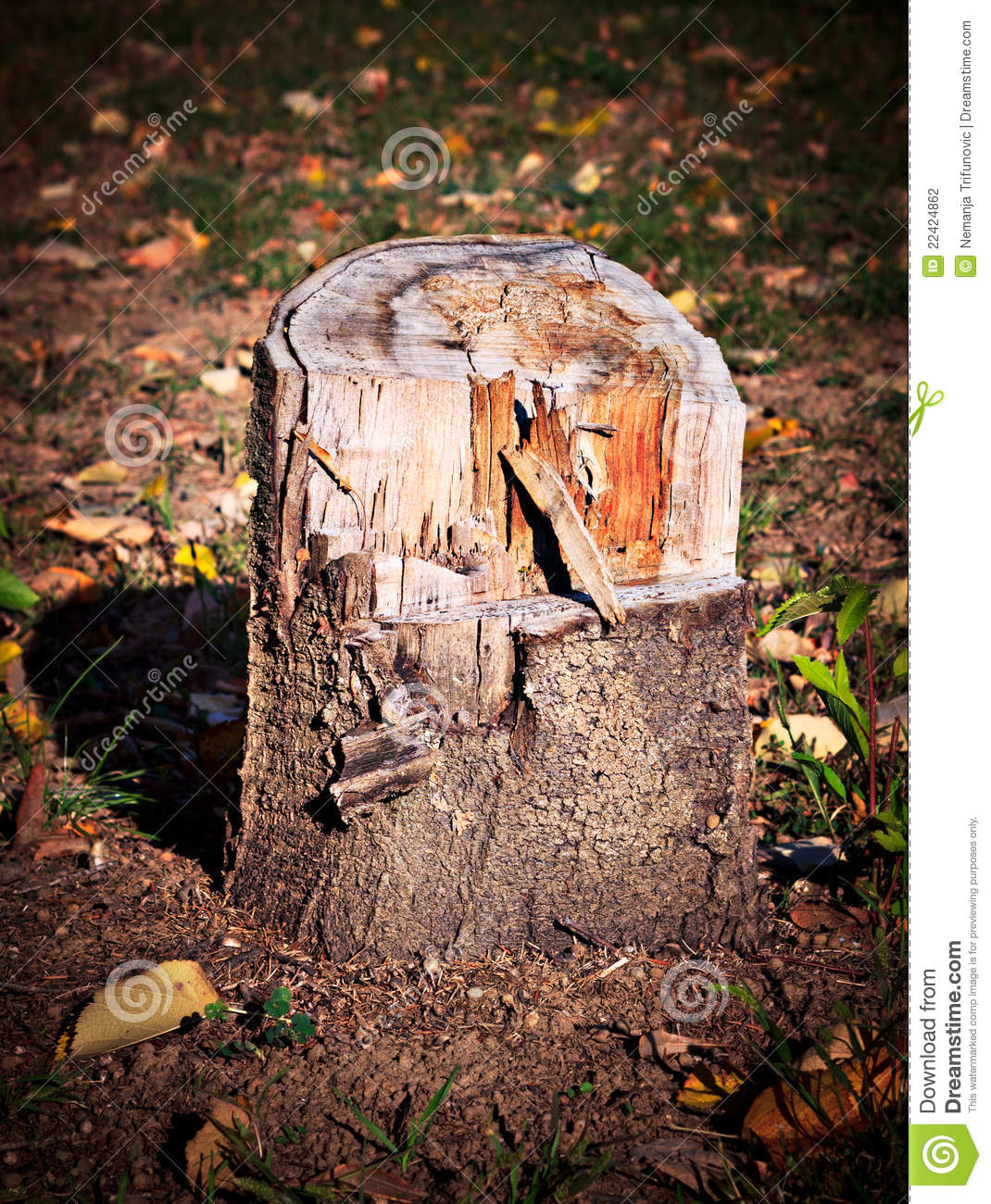 how to cut stump roots
