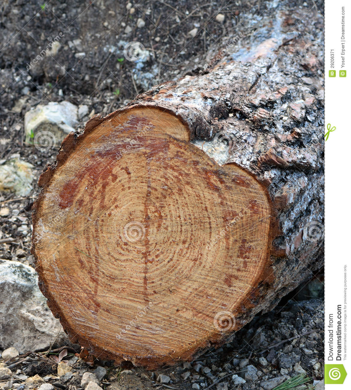 Tree stump stock image