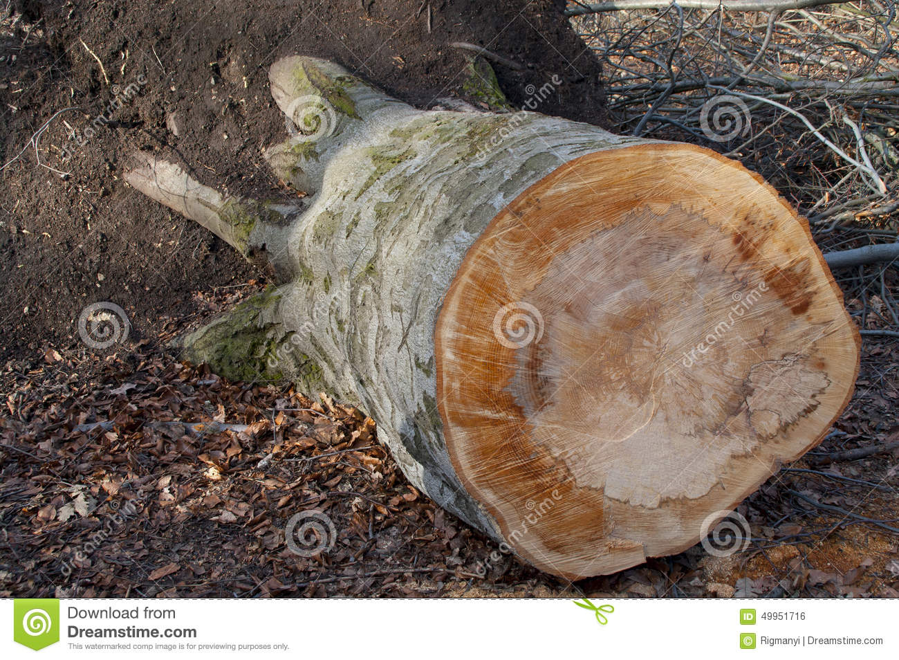 how to cut up fallen tree