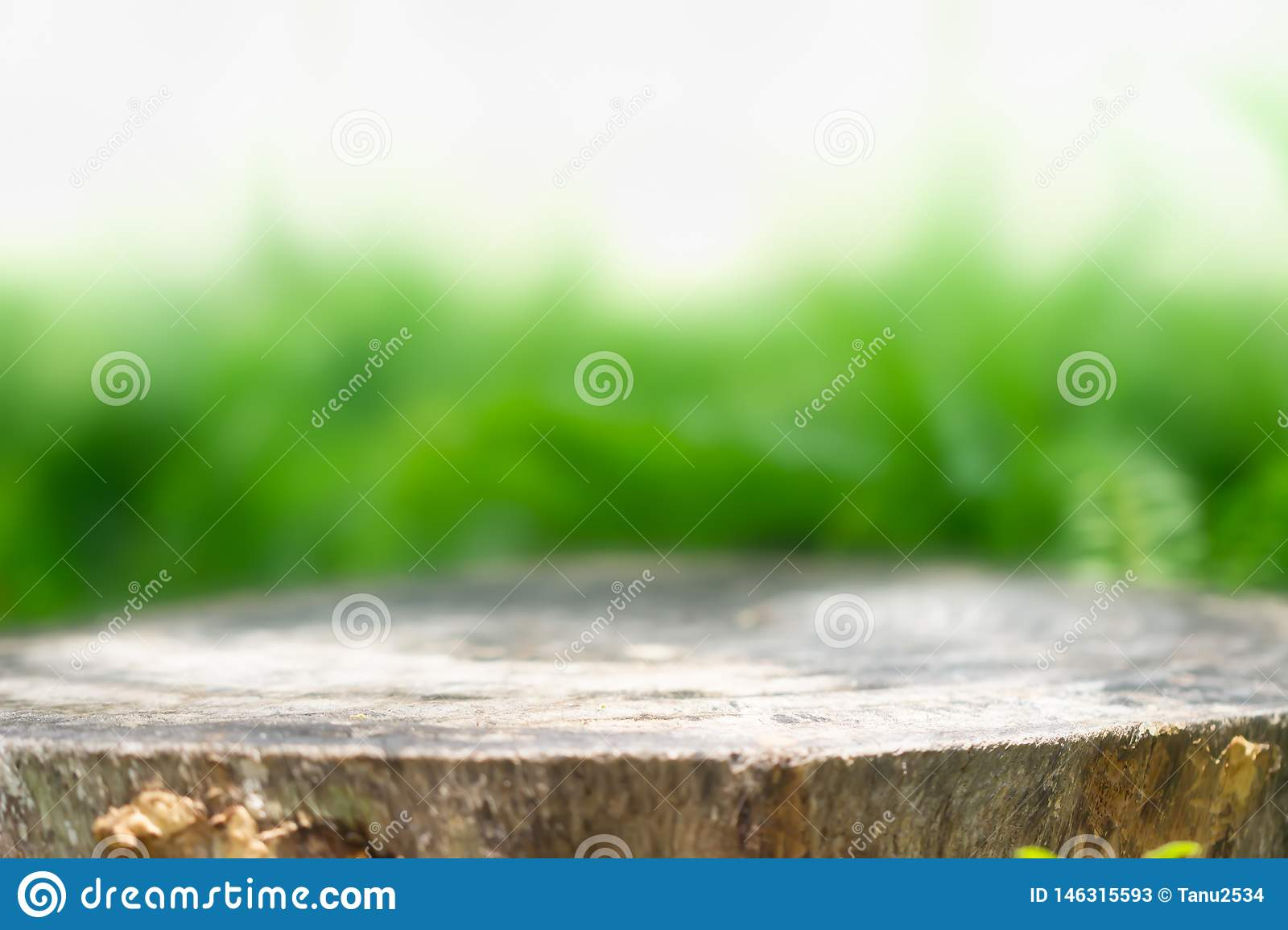 Tree stump for product display montages. Natural background.