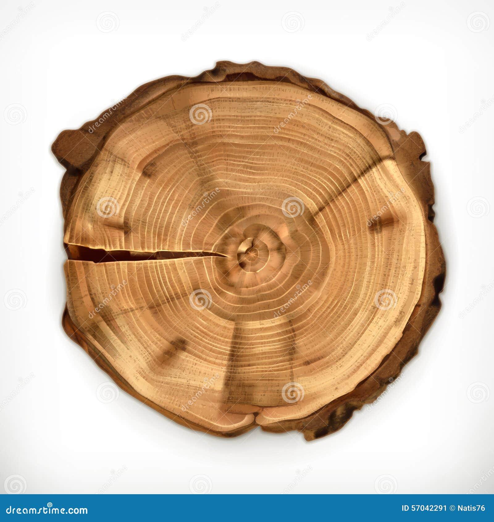 Xylem Tree Rings