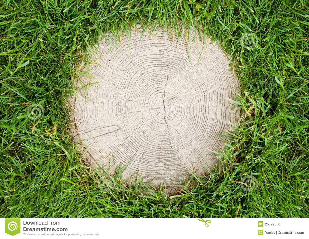Tree stump surrounded by grass