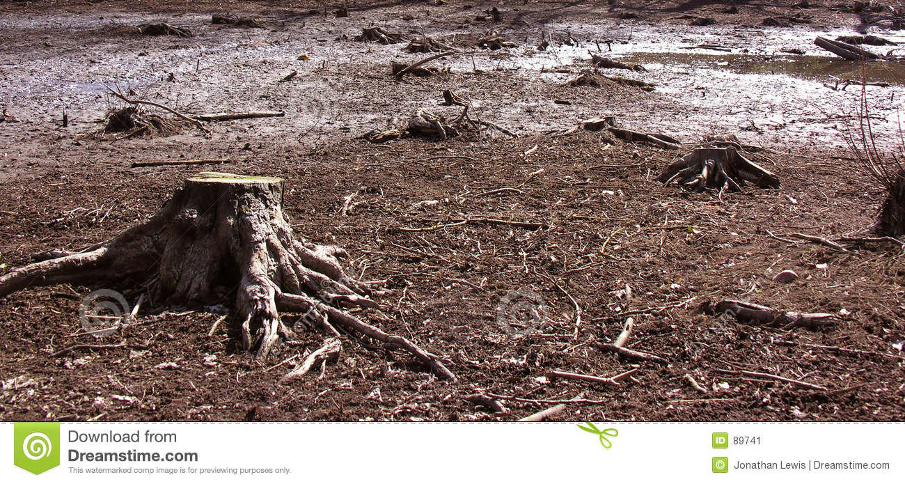 Tree stump in a swamp