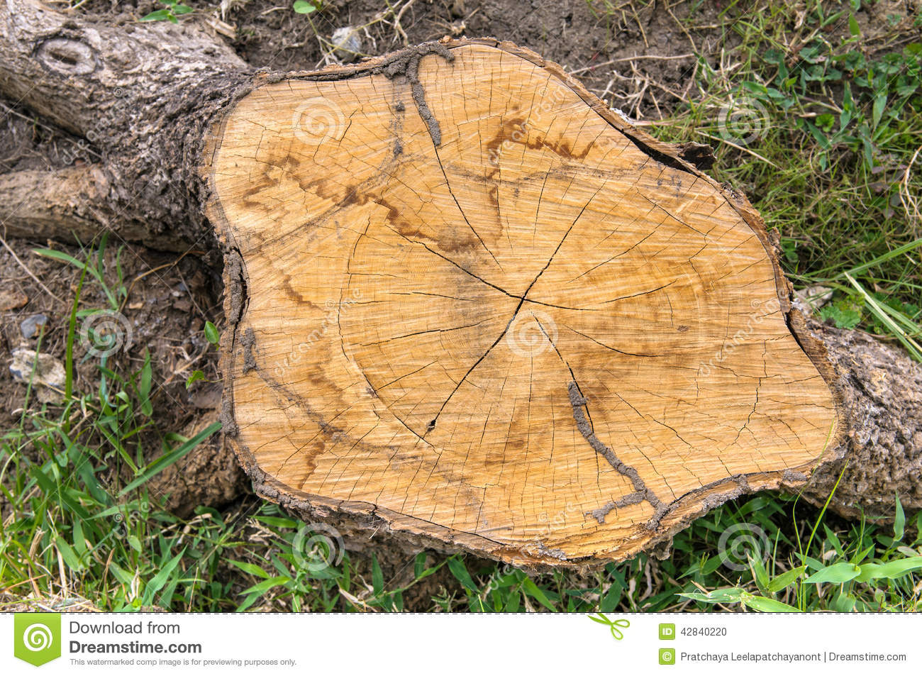 Tree stump stock photo image