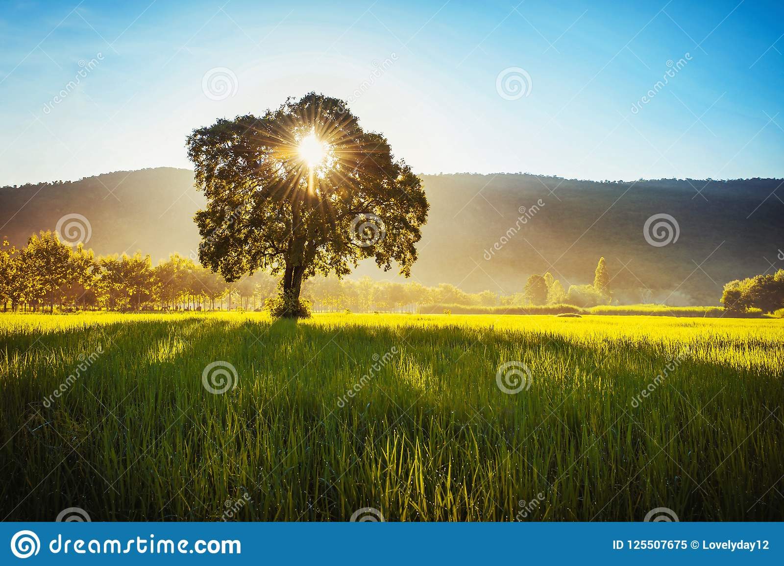 tree and sunrise over mountain