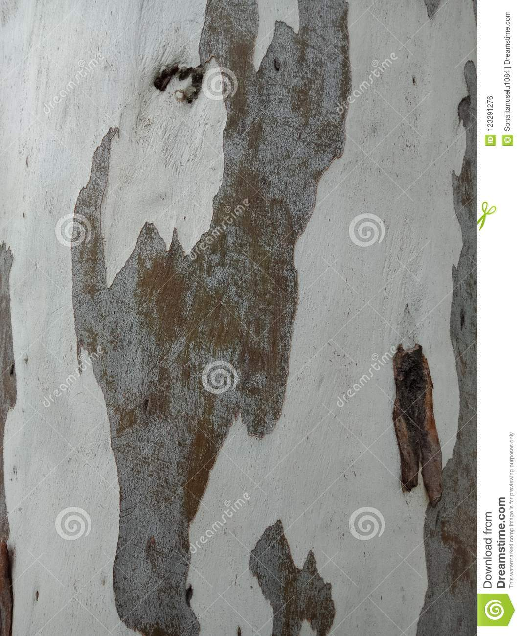 Tree surface textured background. nature background wallpaper.