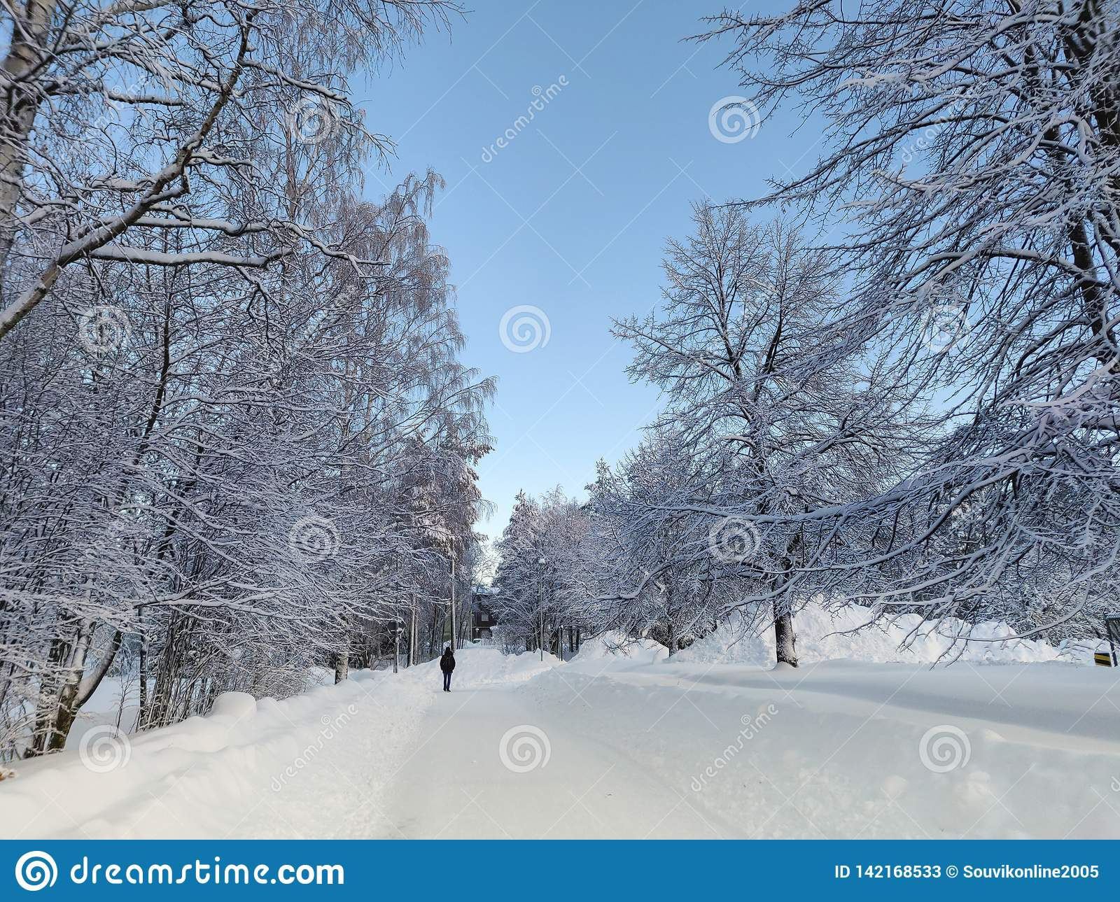 Tree surrounded empty street snowscape under the bluesky with scenic panoromic beauty