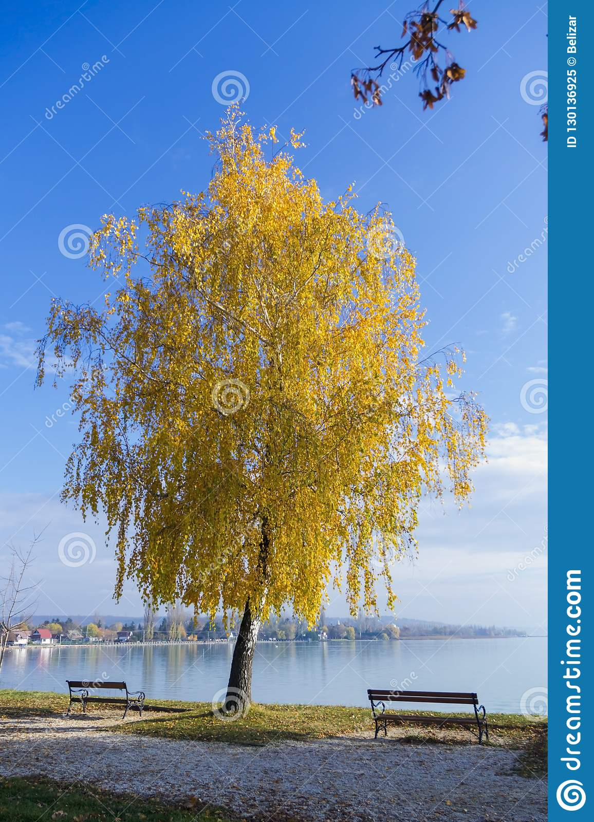 Tree at te beach
