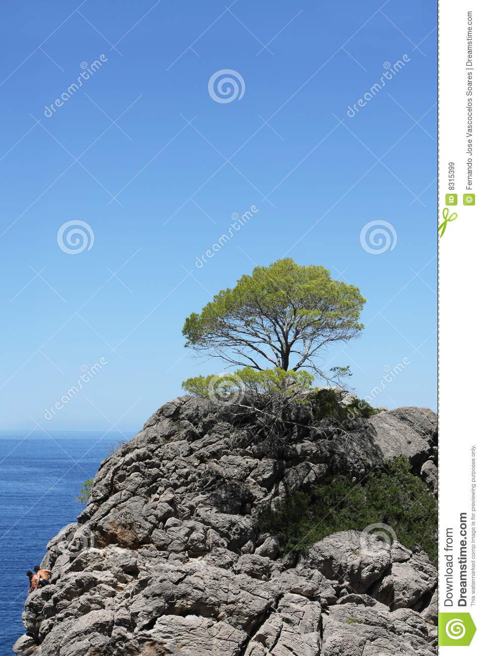 Top Of The Trees Stock Photography - Image: 35130172