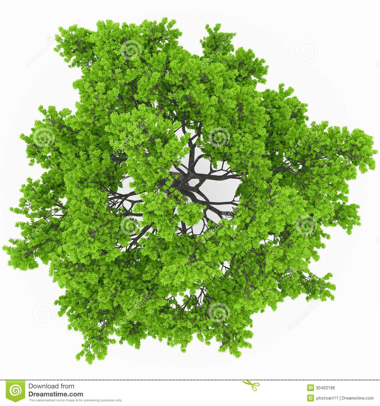 Download Tree Top View Stock Illustration Of Light