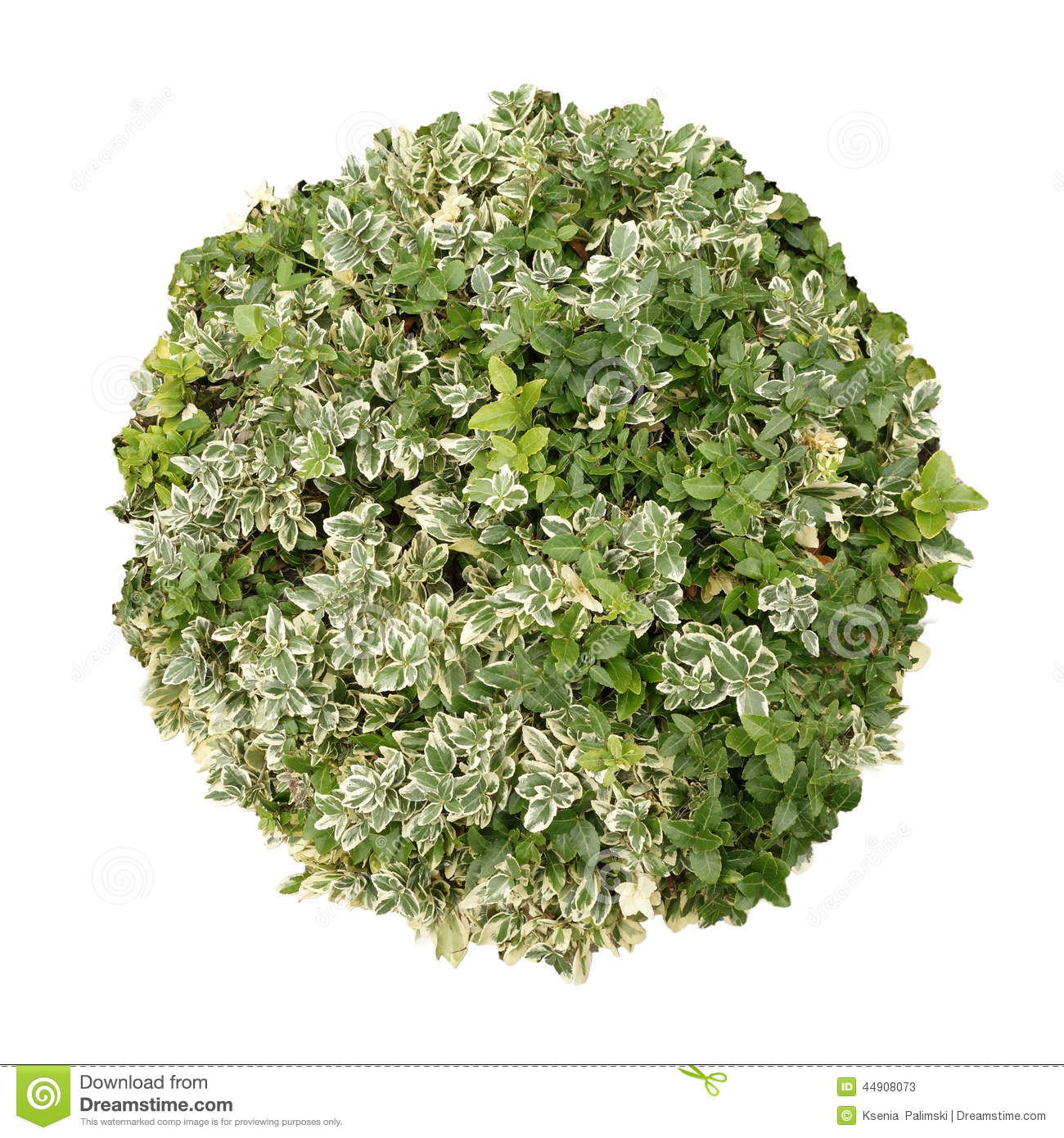 Tree top view stock image image of summer bush above for Country plans com