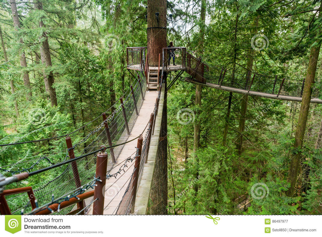 a tree top walkway at the capilano suspension bridge park editorial photography image 86497977. Black Bedroom Furniture Sets. Home Design Ideas