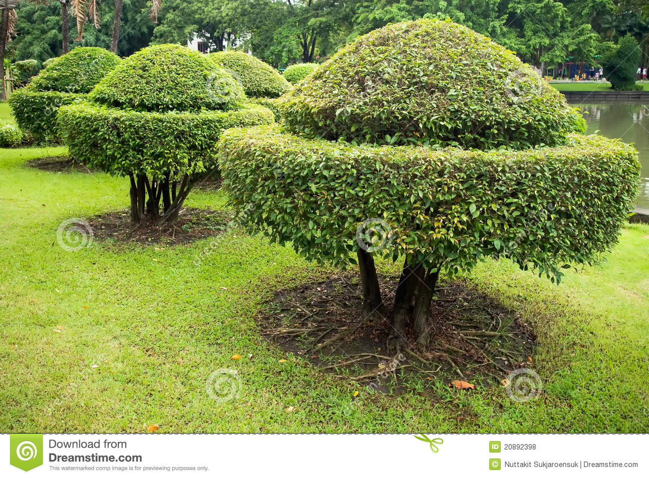 ... Is A Beautiful Shape Royalty Free Stock Photos - Image: 20892398: dreamstime.com/royalty-free-stock-photos-tree-trimming-beautiful...