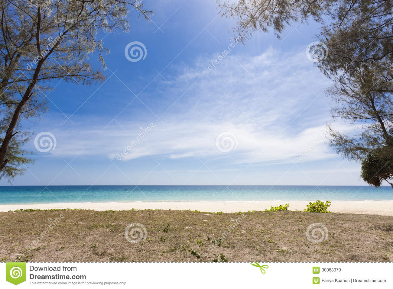 tree on tropical beach,beautiful scenery background for summer a