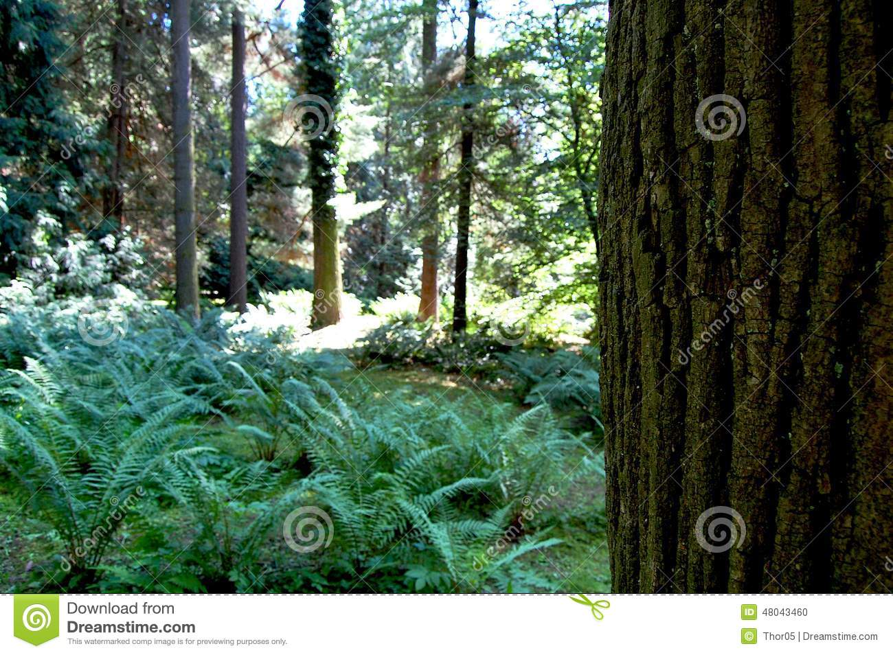 Tree trunk on a background of forest clearing