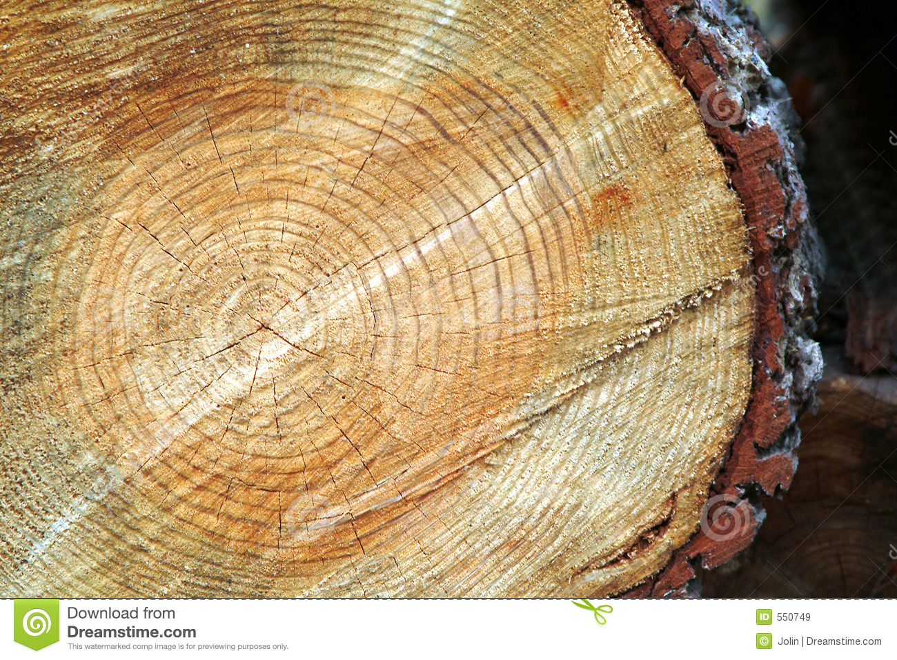 Tree trunk after being cut stock image. Image of lumber ...