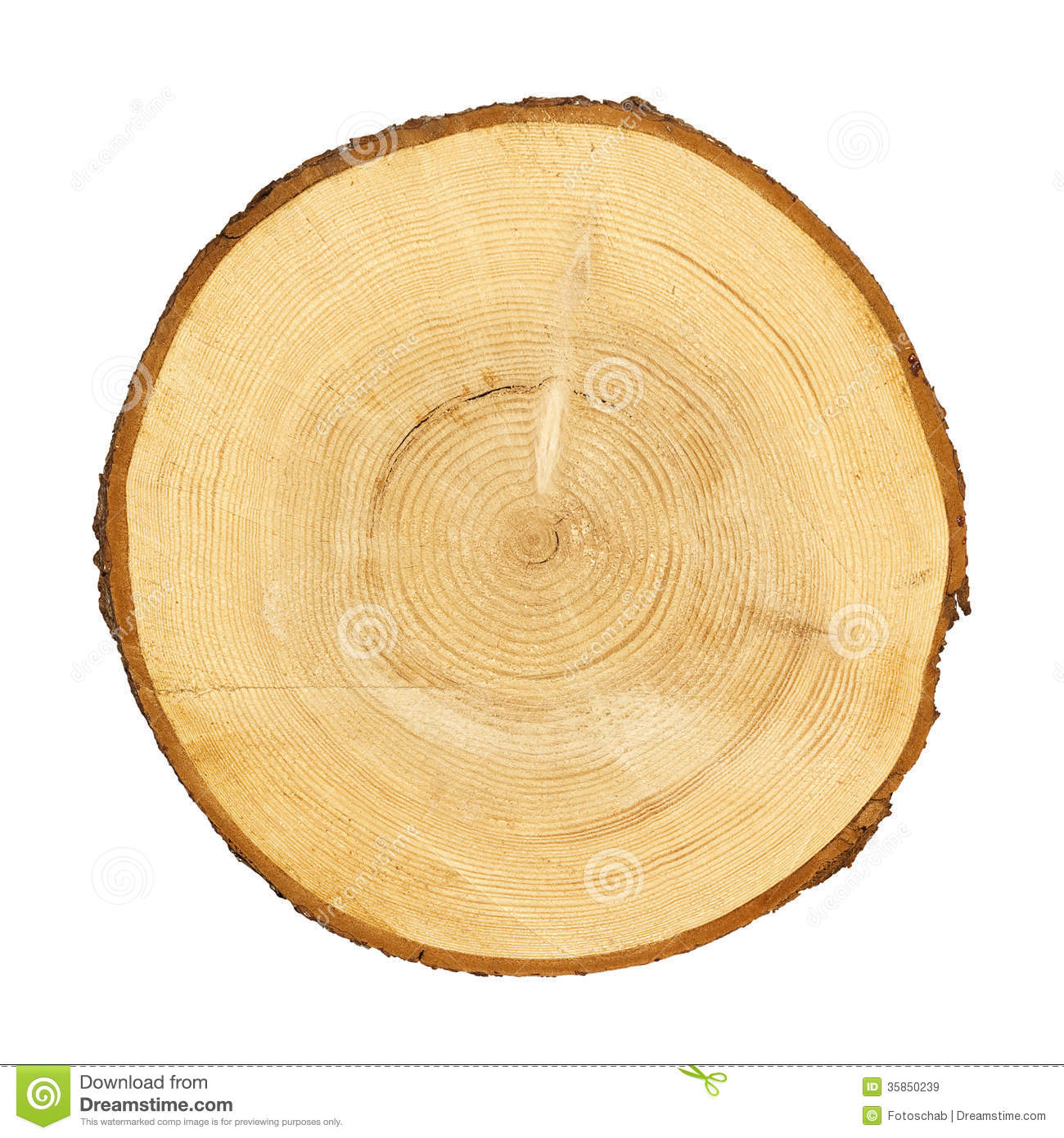 Tree trunk cross section. CLIPPING PATH