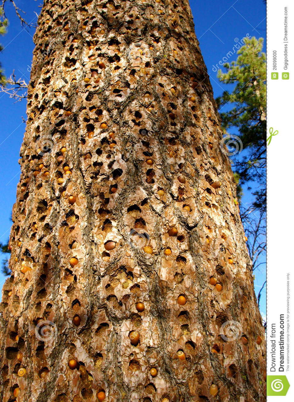 Tree Trunk with Hole