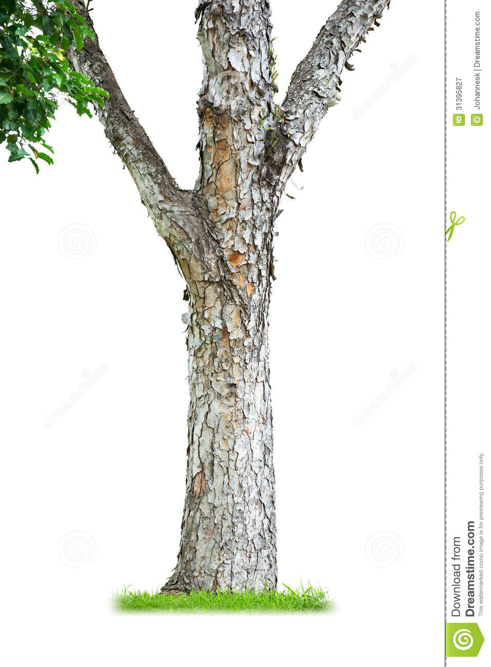 Tree Trunk Royalty Free Stock Photography - Image: 31395827