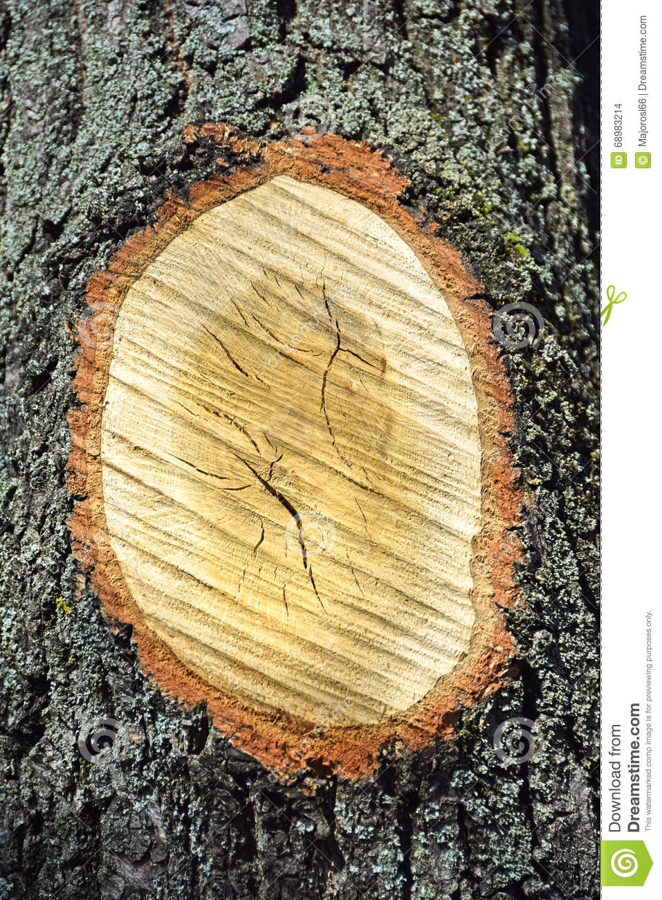 Tree trunk with truncated branch