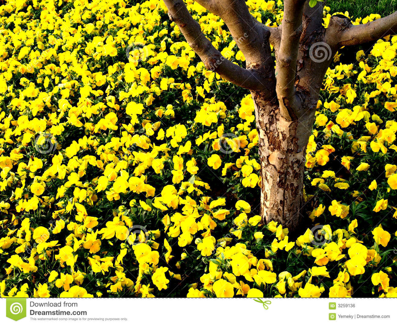 Tree trunk with yellow flowers royalty free stock image image 3259136 - Flowers that grow on tree trunks ...