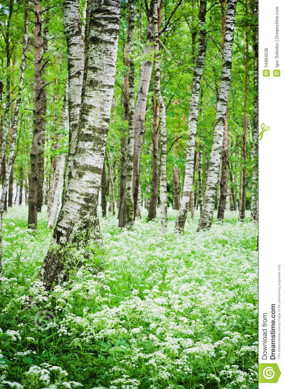 Tree trunks in a birch forest and wild flowers royalty free stock image image 34964536 - Flowers that grow on tree trunks ...