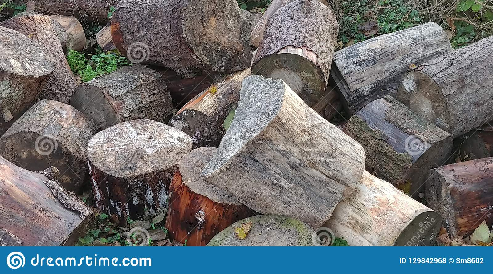 Tree trunks in the woods