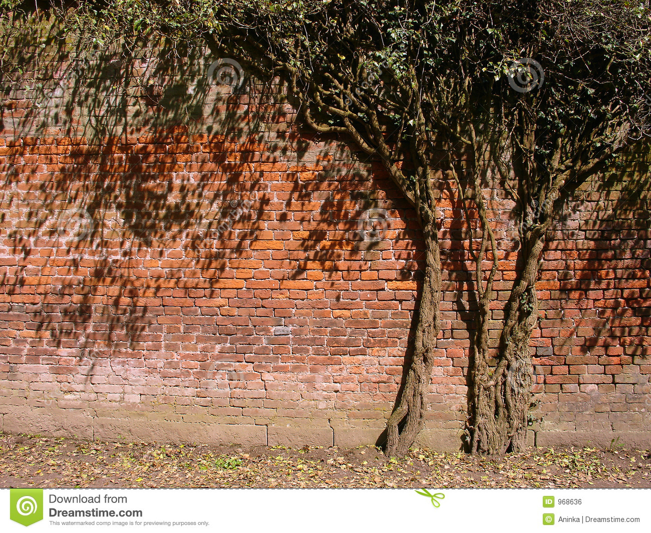 Tree in the Wall