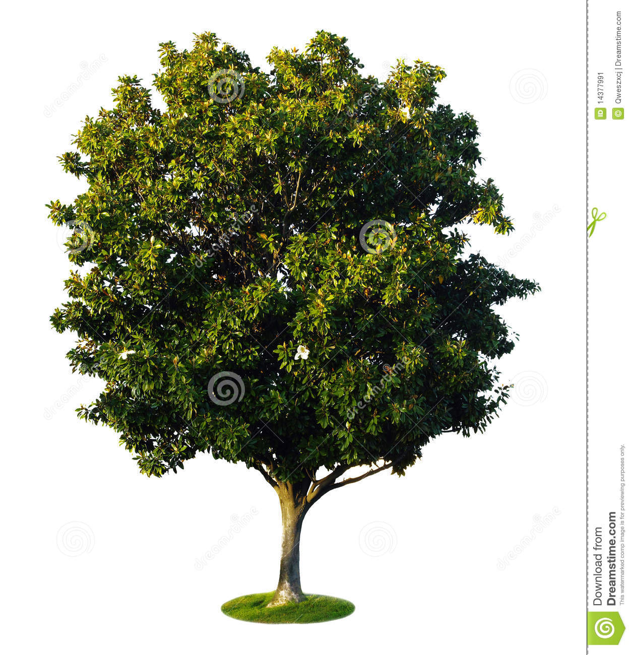 a tree with a white background no1