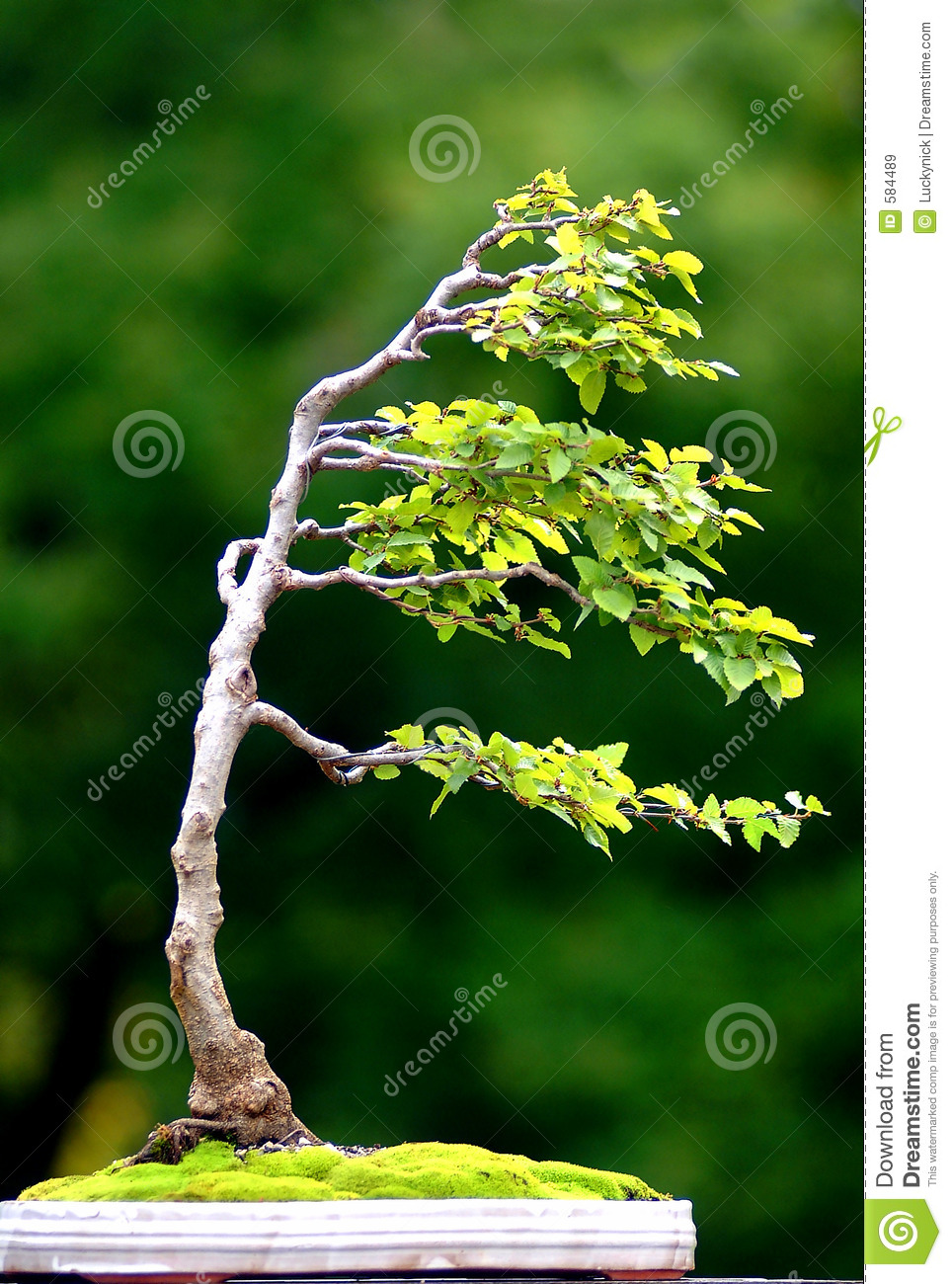 Tree on wind