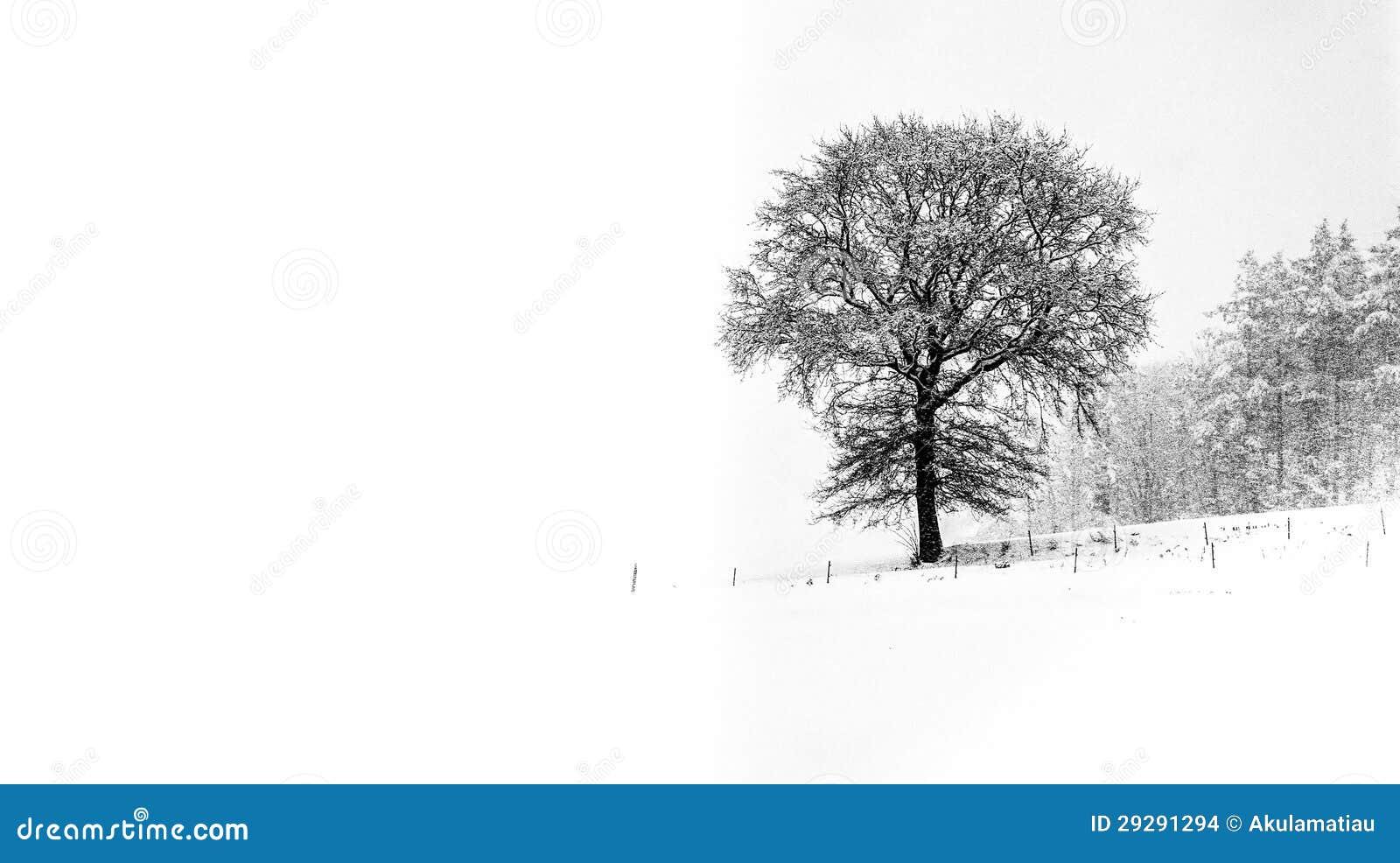Tree and Winter II