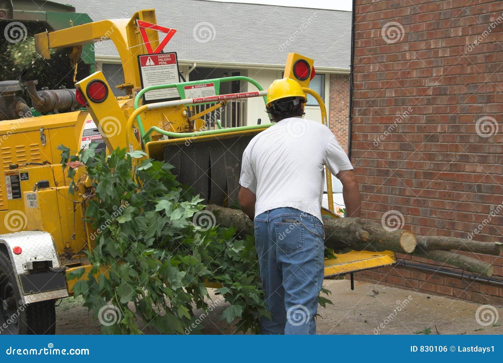 Tree worker feeding chipper