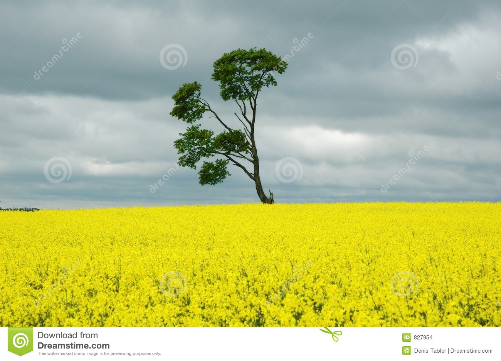 Tree on yellow