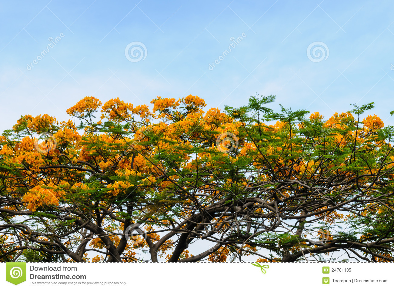 Tree With Yellow Flower And Sky Stock Image Image 24701135