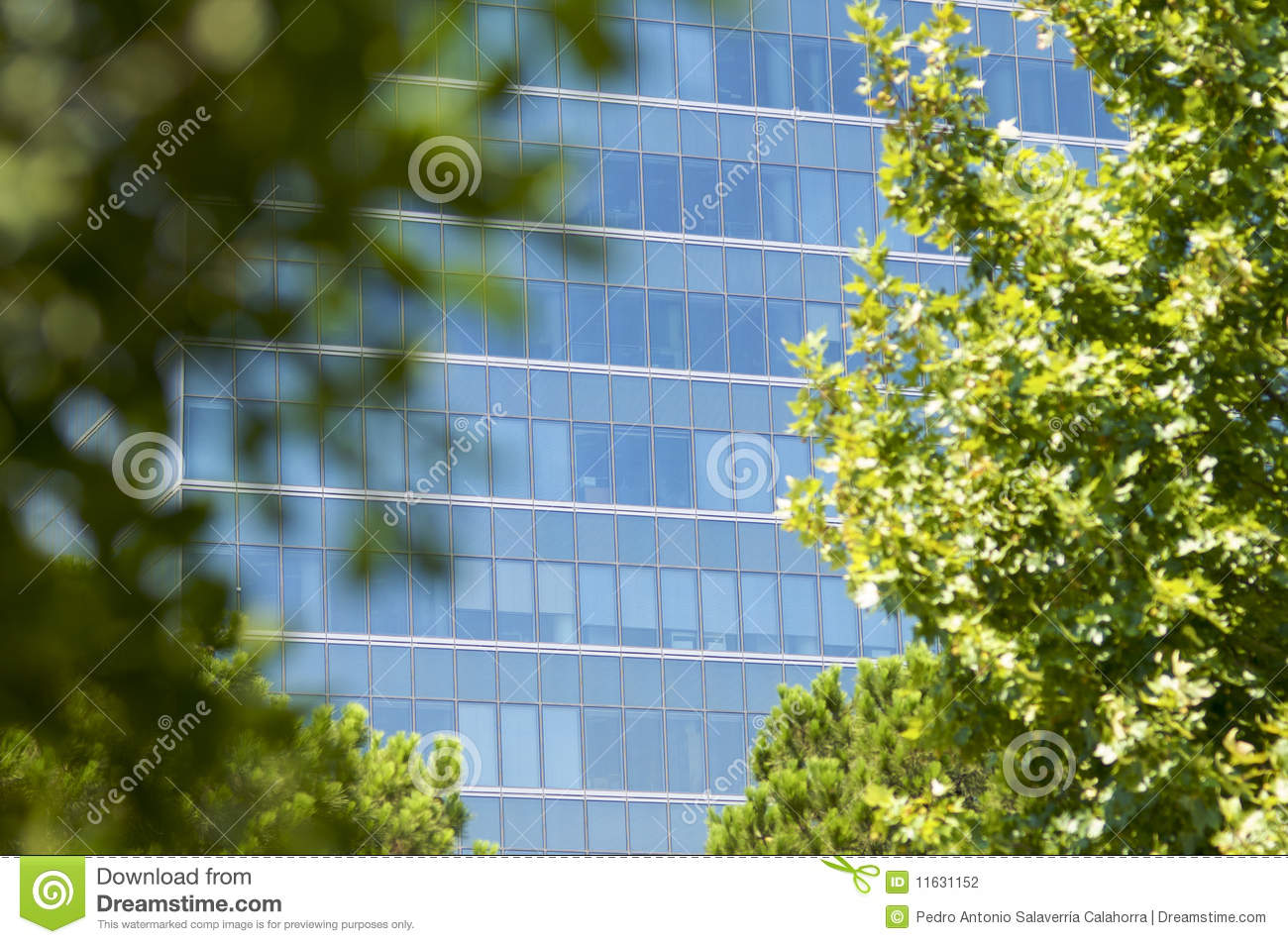 Between The Trees Stock Photography Image 11631152