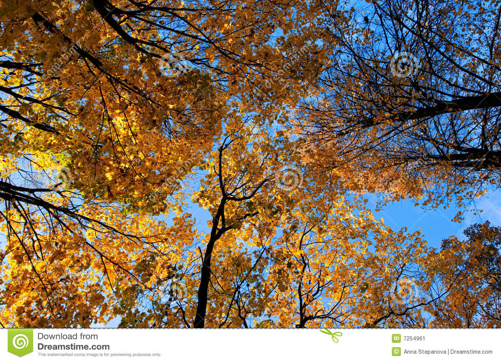 Trees&sky