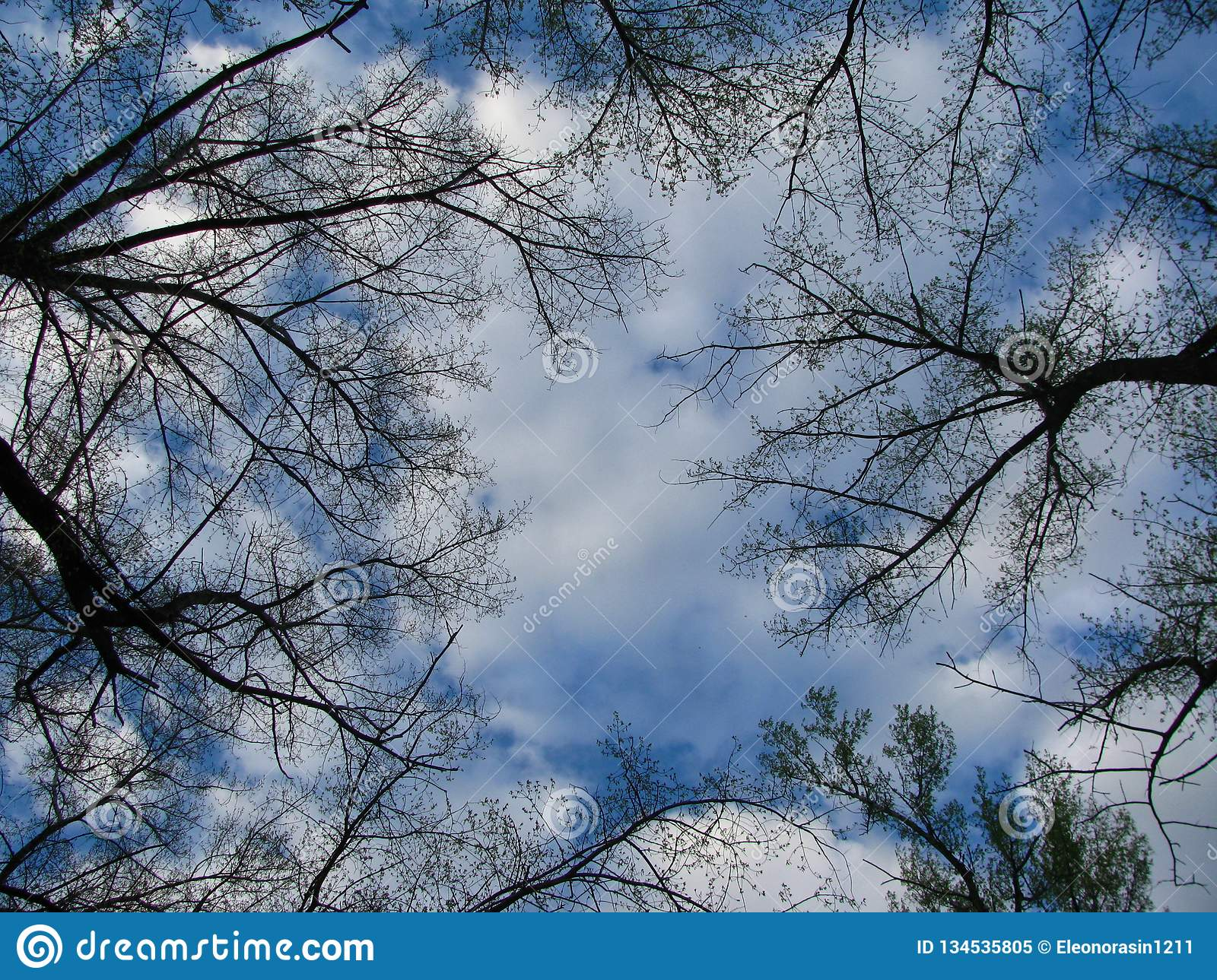 Trees aspire up into the white clouds
