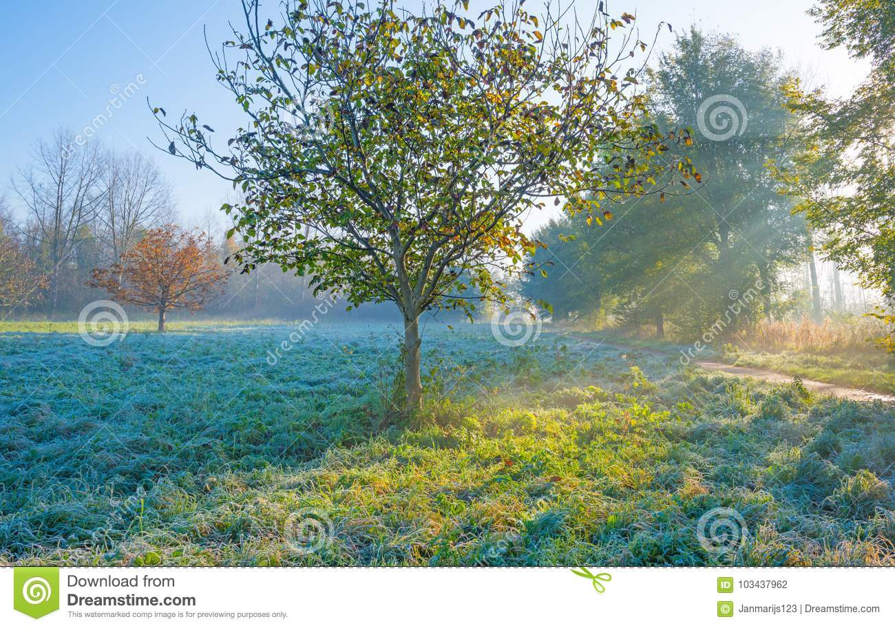 Trees In Autumn Leaf Colors In A Foggy Field At Sunrise At Fall ...